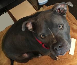 reiki for dogs, reiki for animals